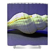 Seashell Fusinus Irregularis Shower Curtain