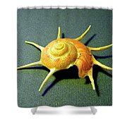 Seashell Guildfordia Yoca Shower Curtain