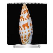Seashell In Fishnet Shower Curtain