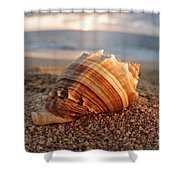 Seashell In The Sand Shower Curtain