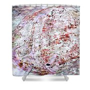 Seashell Of Pearl  Shower Curtain