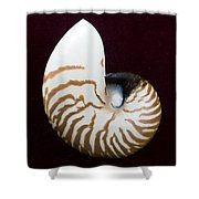 Seashell On Black Background Shower Curtain