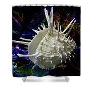 Seashell Spondylus Americanus Shower Curtain
