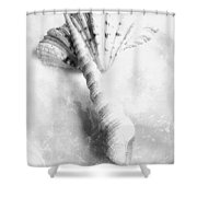 Seashells #2 In Black And White Shower Curtain