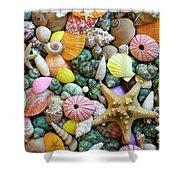 Seashells 3 Shower Curtain