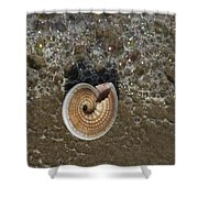 Seashells By The Sea Shower Curtain