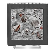 Seashells Collage Of Any Color Shower Curtain