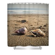 Seashells In The Sand Shower Curtain