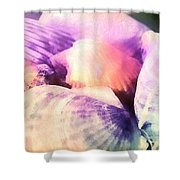 Seashells Painted  Shower Curtain