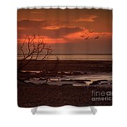 Seashore At Dawn Shower Curtain