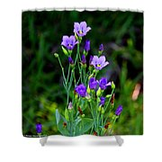 Seaside Gentian Wildflower  Shower Curtain