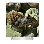 Seaside Ground Squirrel Shower Curtain