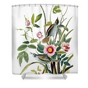 Seaside Sparrow, 1858 Shower Curtain