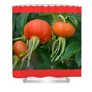 Season End Shower Curtain