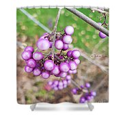 Seasonal Charm Shower Curtain