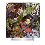 Seaweed And Pebbles Shower Curtain
