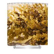 Seaweed In The Sand Shower Curtain