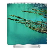 Seaweed Patterns Shower Curtain