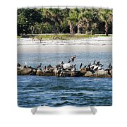 Sebastian Inlet State Park IIi Shower Curtain