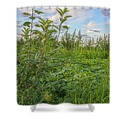 The Secret Life Of Gourds Shower Curtain