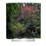 Secret Of The Forest Shower Curtain