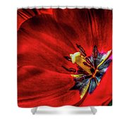 Secret Of The Red Tulip Shower Curtain
