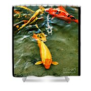 Secrets Of The Wild Koi 11 Shower Curtain