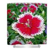Sedona Dianthus Shower Curtain