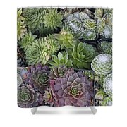 Sedum Plants Used As Green Roof Shower Curtain