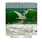 See Gull Shower Curtain