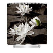 See Roses In The Pond Shower Curtain