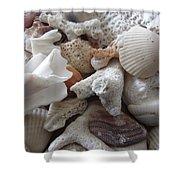 See Sea Shells Fom The Sea Shower Curtain