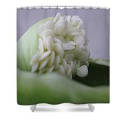 Seed Ala Bell Shower Curtain