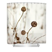 Seed Heads In The Snow Shower Curtain
