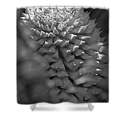 Seed Pod Black And White Shower Curtain