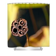 Seed Pod Shower Curtain