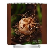 Seed Vase Shower Curtain