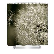Seedy Dandelion Shower Curtain