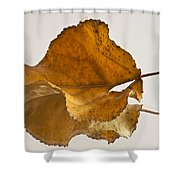 Seeing Double Autumn Leaf  Shower Curtain