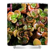Seeing Succulents Shower Curtain