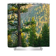Seeing The Forest Through The Tree Shower Curtain