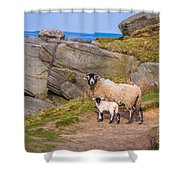 Seep And Lamb Shower Curtain