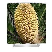Sago Palm Flower Shower Curtain