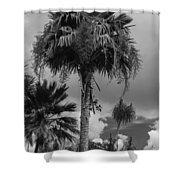 Selby Garden Palms Shower Curtain