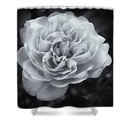 Selenium White Rose Shower Curtain