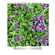 Selfheal In The Lawn Shower Curtain