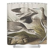 Semipalmated Snipe Or Willet Shower Curtain