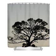 Senset Trees Shower Curtain