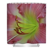 Sensual Pink Lilly Shower Curtain