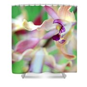Sensual Touch Of Exotic II. Orchid II Shower Curtain